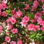 花の名前を英語で言えますか?